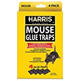 Harris Pre-Baited Mouse Glue Traps, Non-Toxic and Fully...