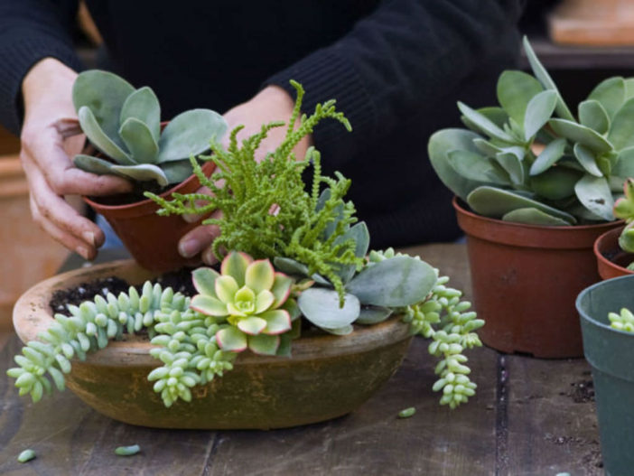 How Fast Do Succulents Grow And Ways To Grow Them Even Faster