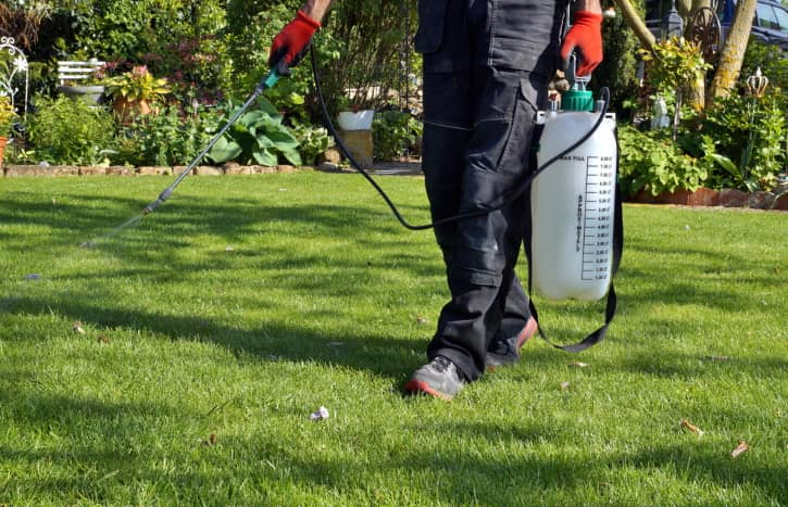 What to Consider When Buying a Weed Killer for Expansive Lawns?