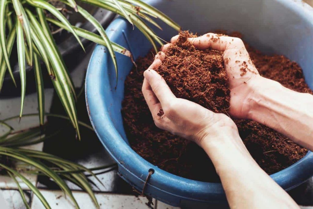 What is Coco Coir & How to Use it in Hydroponic