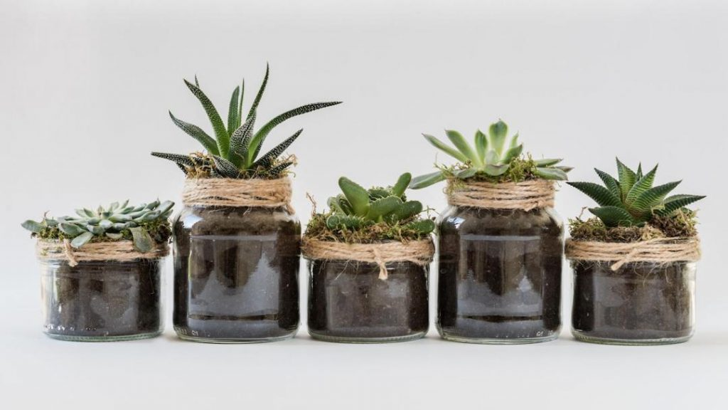 How to Fertilize Succulents - Home Gardening Tips