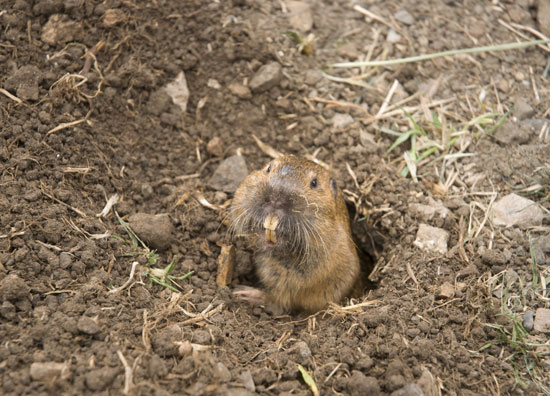 How to Stop Animals From Digging Holes in the Yard