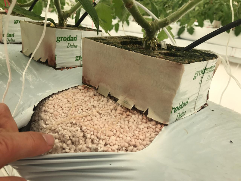 What is Perlite, its use and is it organic? Perlite or Vermiculite?