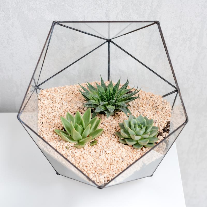 How to Water Succulents Without Drainage Holes