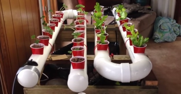 19 DIY Aquaponics System Ideas (#5 is the Easiest)