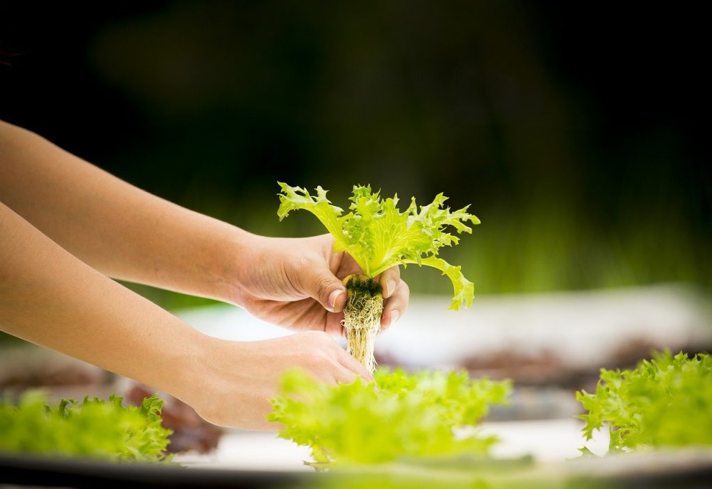 Hydroponic reduce water consumption