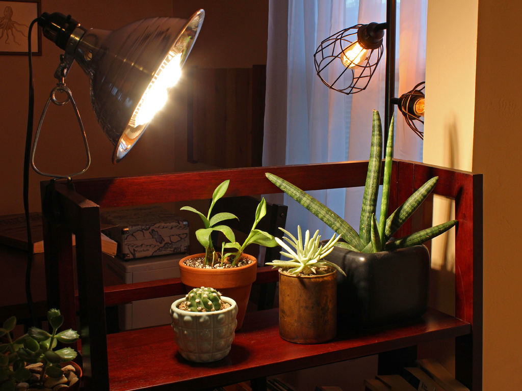 Best Grow Lights for Succulents and Why You Need One
