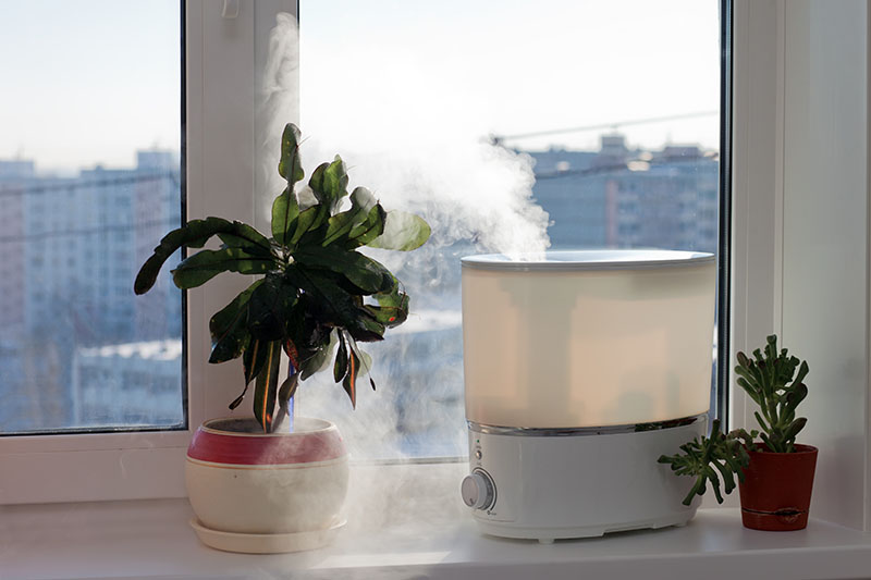 Best Humidifier for Plants Review and Buying Guide