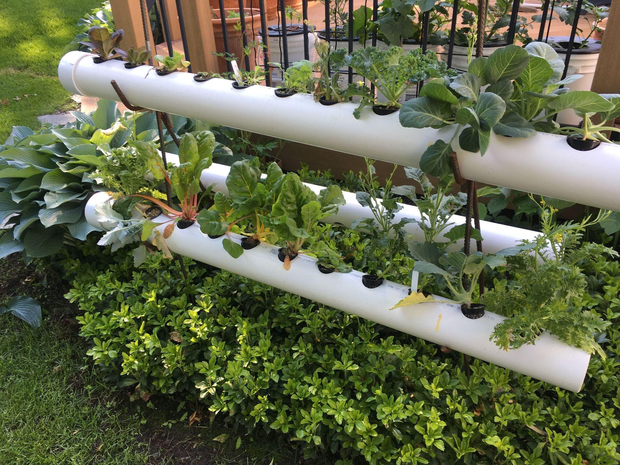 19 DIY Hydroponic Plans You Can Easily Set Up