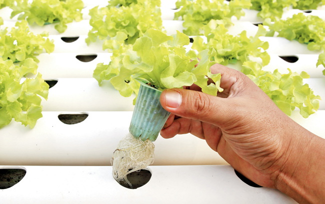 Hydroponic Nutrient Film Technique (NFT) System Setup and Guide