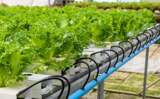 The Ultimate Guide to Hydroponic Growing Mediums