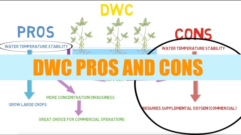 Deep Water Culture (DWC) Hydroponic System Guide (Nutrients & Setup) for Beginners