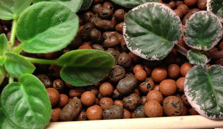 How to Use Expanded Hydroton Clay Pebbles (Leca Ball) for Hydroponic Plants (Grow Guide)