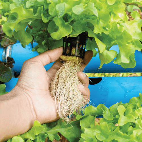 Best Water Chiller for Hydroponics
