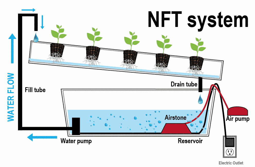 Best Hydroponic Systems Grow Kits (Complete Setup) For Beginners