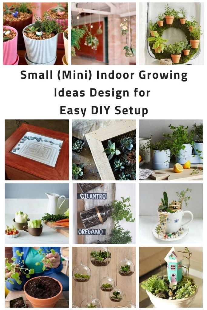 Small (Mini) Indoor Growing Ideas Design for Easy DIY Setup
