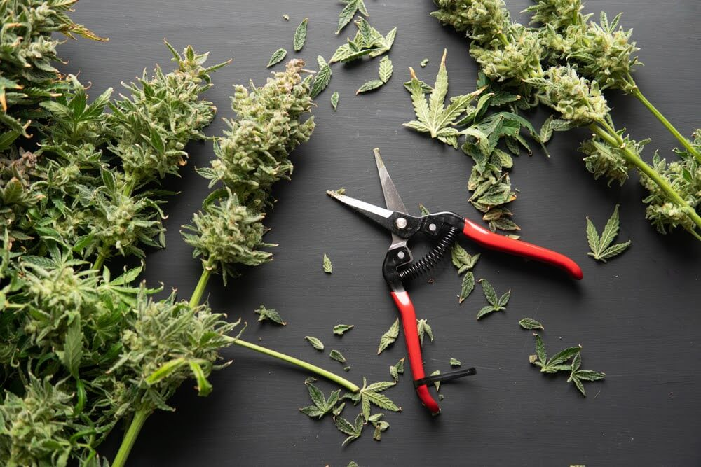 Your Guide to the Best Trimming Scissors