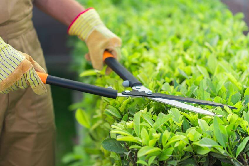 Best Hedge Shears Reviews and Buying Guide