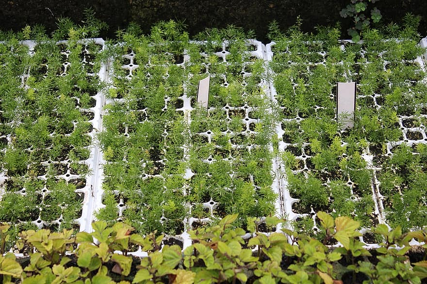 Best Hydroponic Grow Tray Reviews