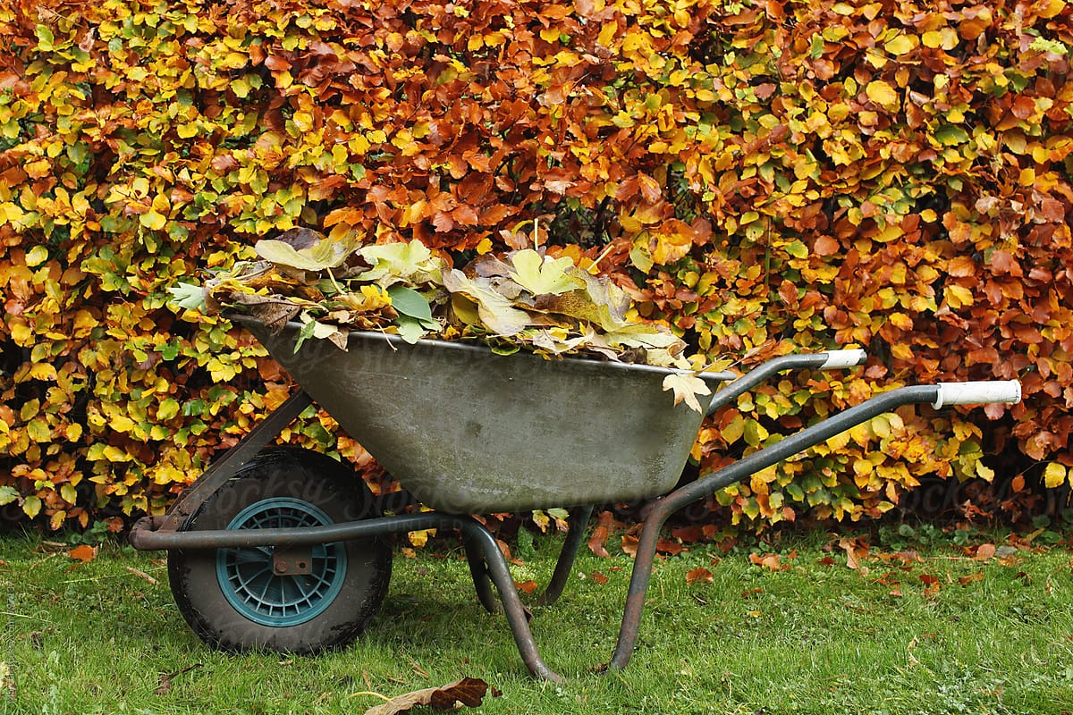 How to Compost Leaves Quickly?