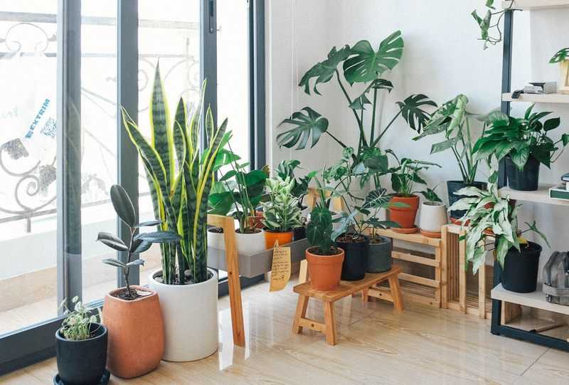 A Guide to Indoor Growing for Beginners