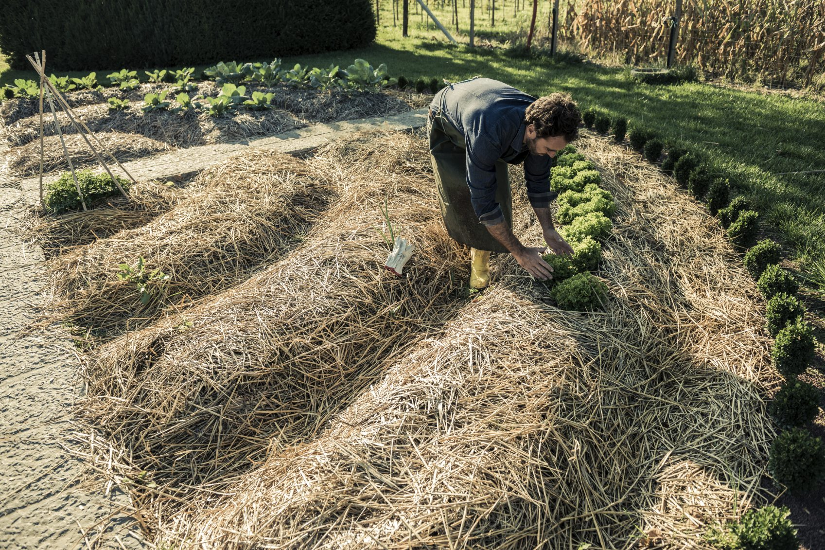 How to Choose the Best Mulch for Vegetable Garden