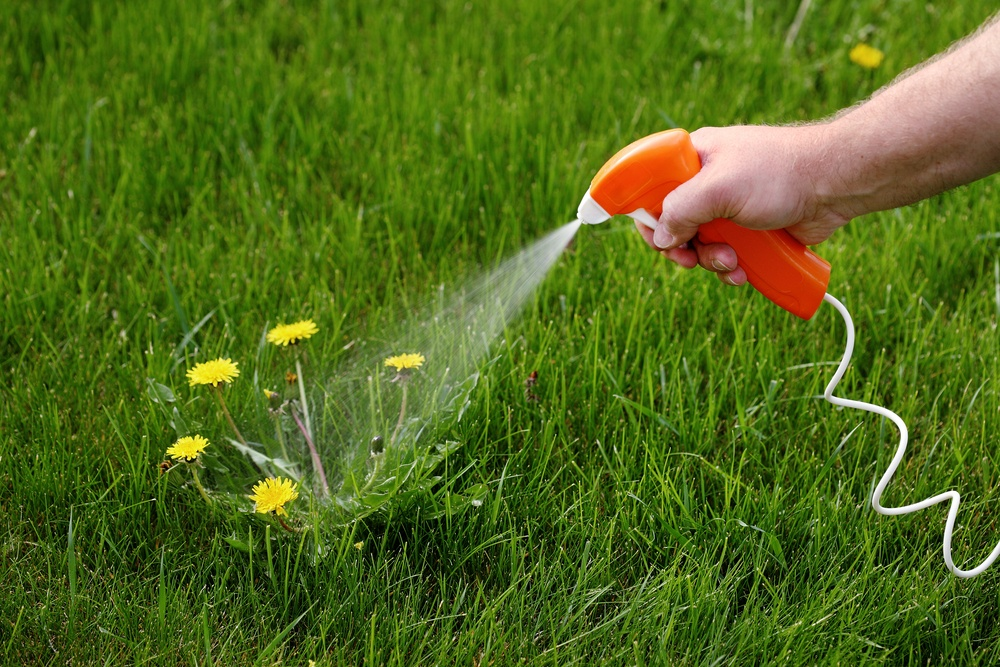 7 Best Herbicide For Creeping Charlie: Your In-depth Guide