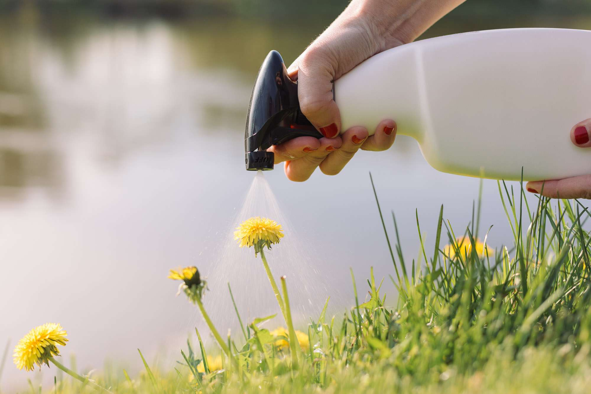 Best Way to Get Rid of Weeds in Garden Permanently (Natural & Chemical Way)
