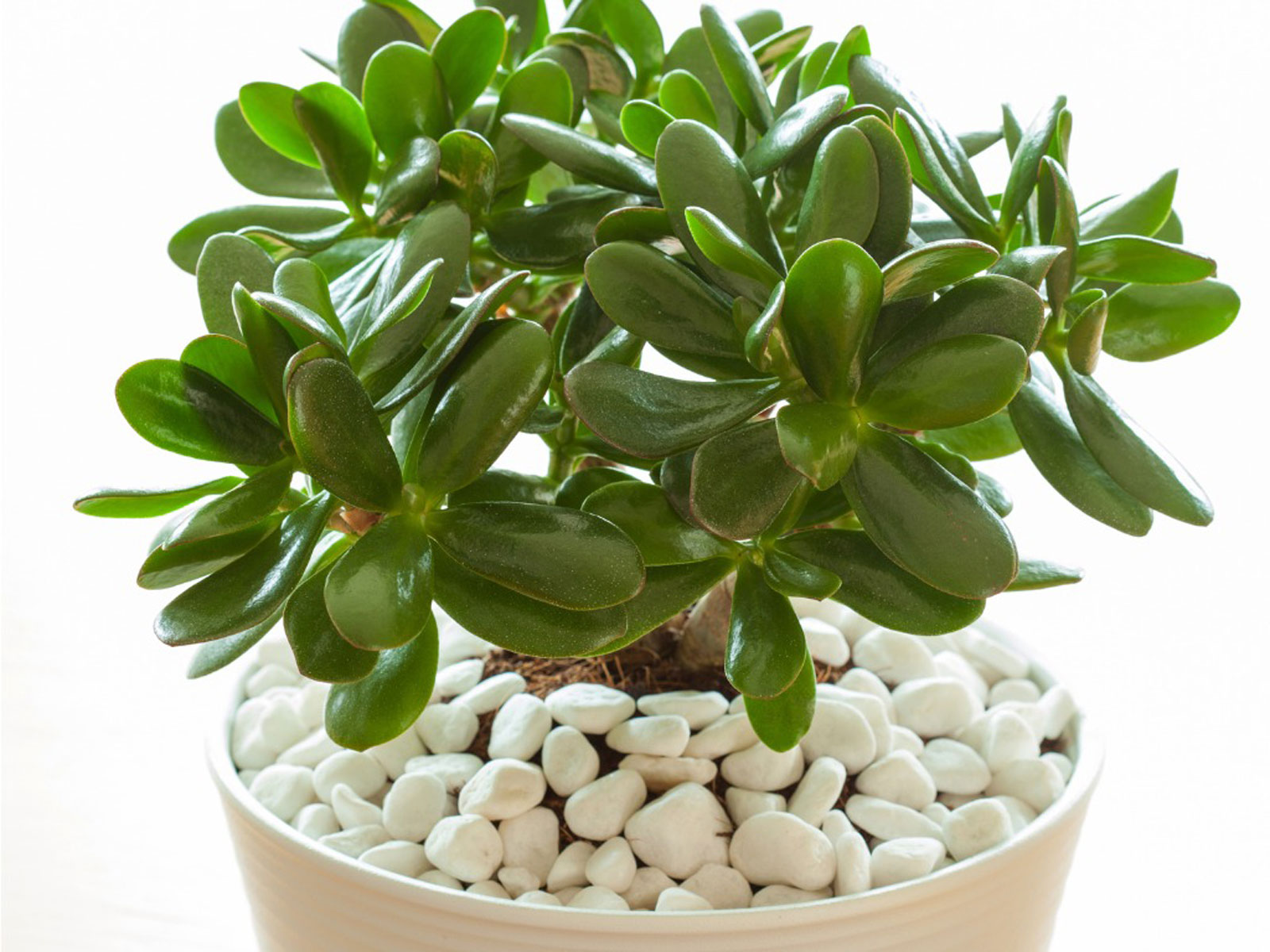 10 Best Office Desk Plants for Working from Home