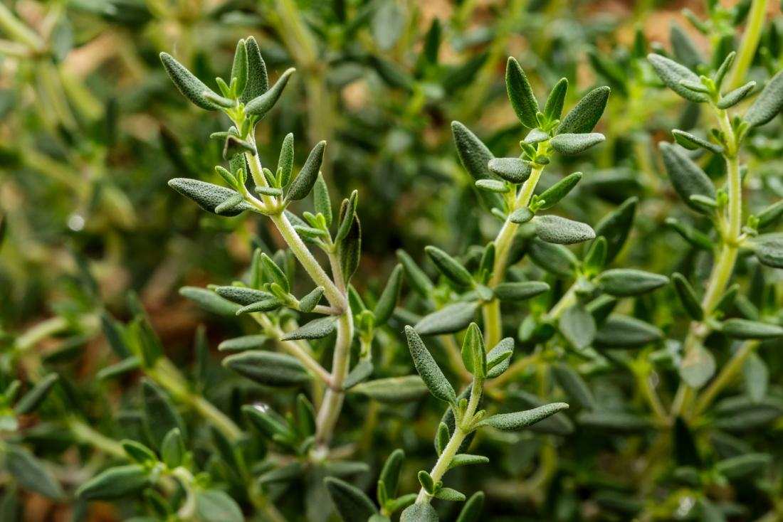 6 Herbs to Help Fight a Cold (You Can Grow Them at Home Too)