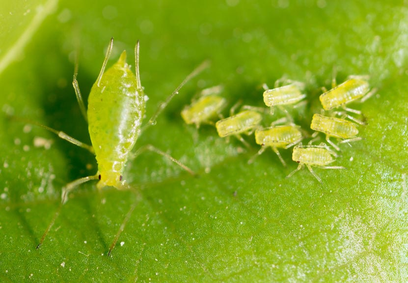 The Ultimate Guide To Organic & Natural Garden Pest Control