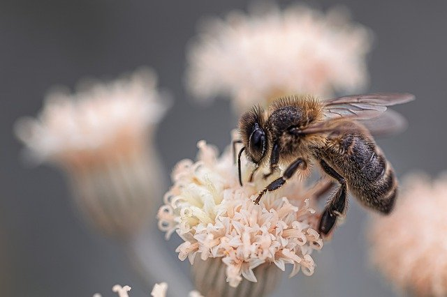 Top 9 Bee Friendly & Loving Plants, Flowers (with input from Gardening Expert)