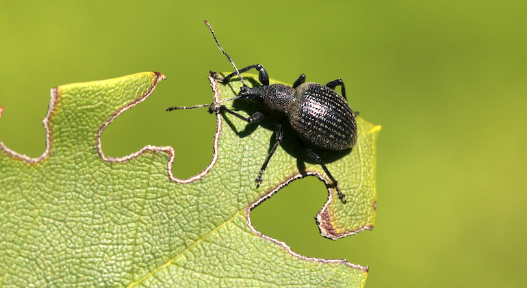 Top 7 Gardening Experts on Common Garden Pests and Natural Pests Control