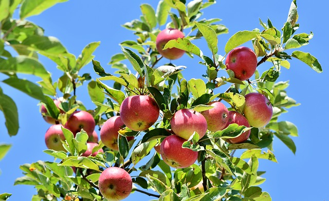 Best Fertilizer For Fruit Trees (Organic and Chemical)