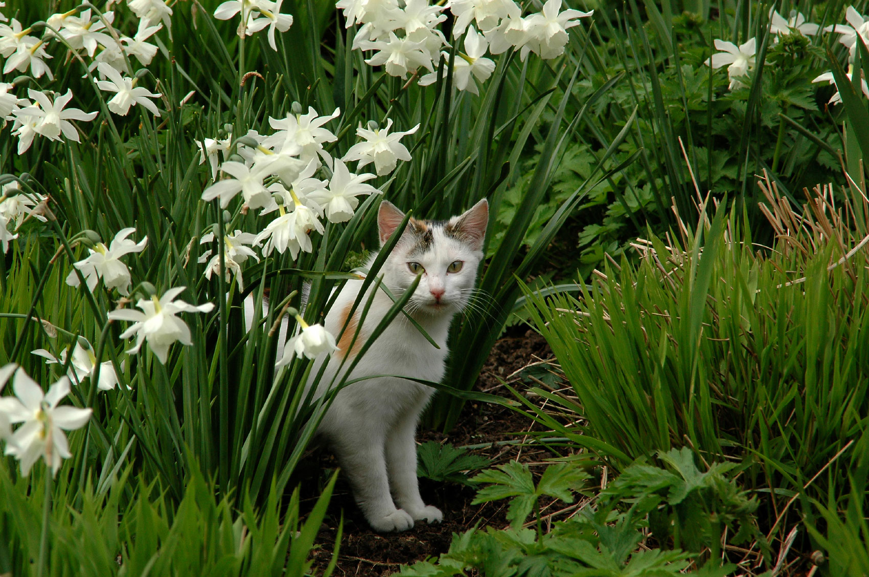 15 Expert Tips on How to Keep Cats Out of Your Yard