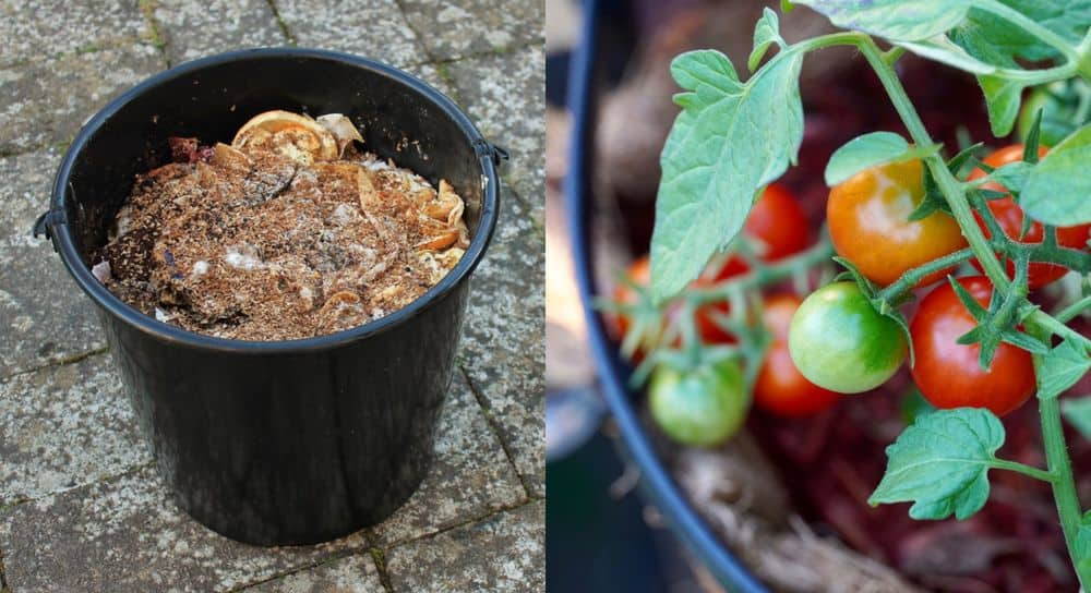 19 Easy Homemade Fertilizer Recipes That Your Plants Will Absolutely Love