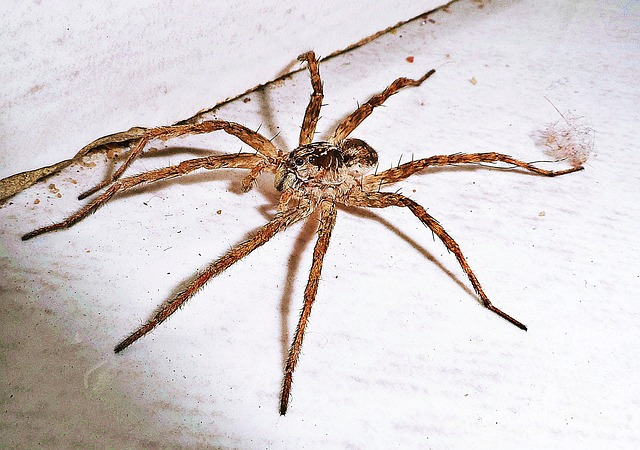 7 Best Spider Killer For Pest Control – A Buying Guide