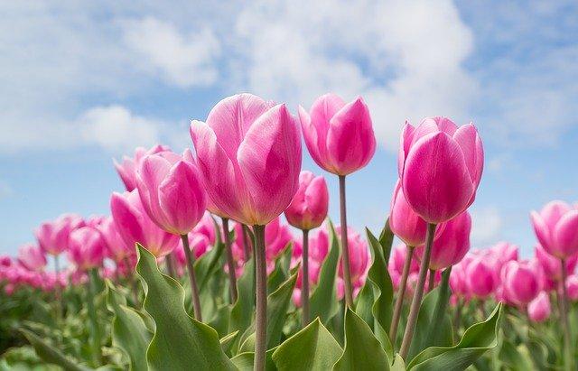10 Easy-to-grow Bulbs for a Garish Garden (Expert Ideas)