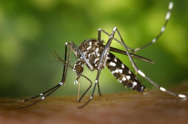 Best Mosquito Spray for Yards: How to Choose the Best One?