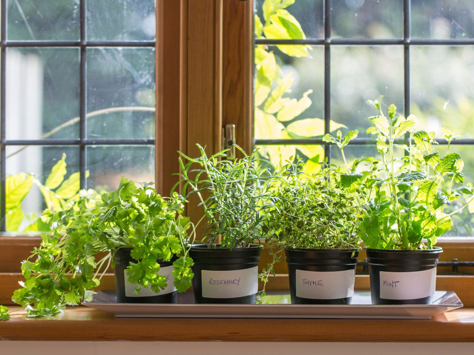 7 Tips From Experts On Windowsill Herb Garden - What Herbs Should Beginners Grow