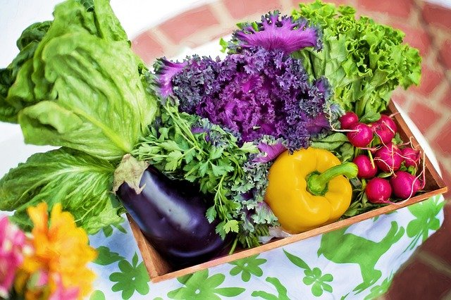 7 best insecticide for vegetable garden reviews & buying guide