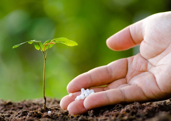 10-10-10 fertilizer: what is, and how to use it
