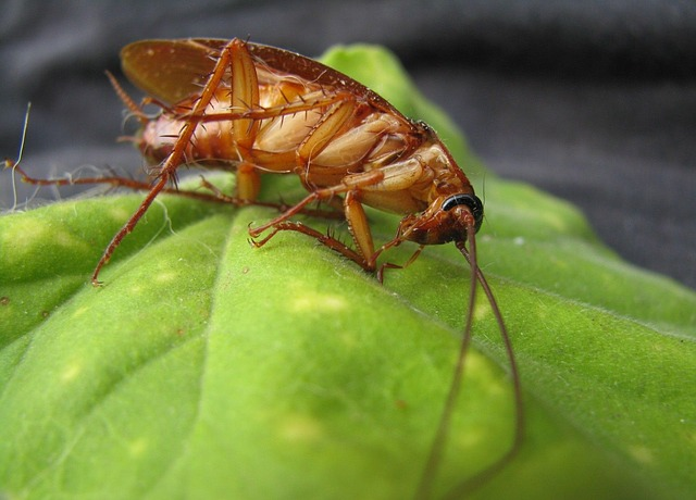 The Best Roach Fogger For Home Buying Guide