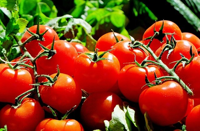 20 Companion Plants for Tomatoes (Expert Recommendations)