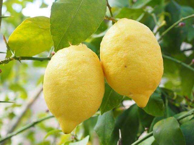 Top 5 Fruits To Grow For Making Desserts