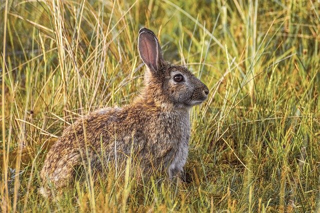Best Rabbit Repellent For Keeping Rabbits Out Of Garden
