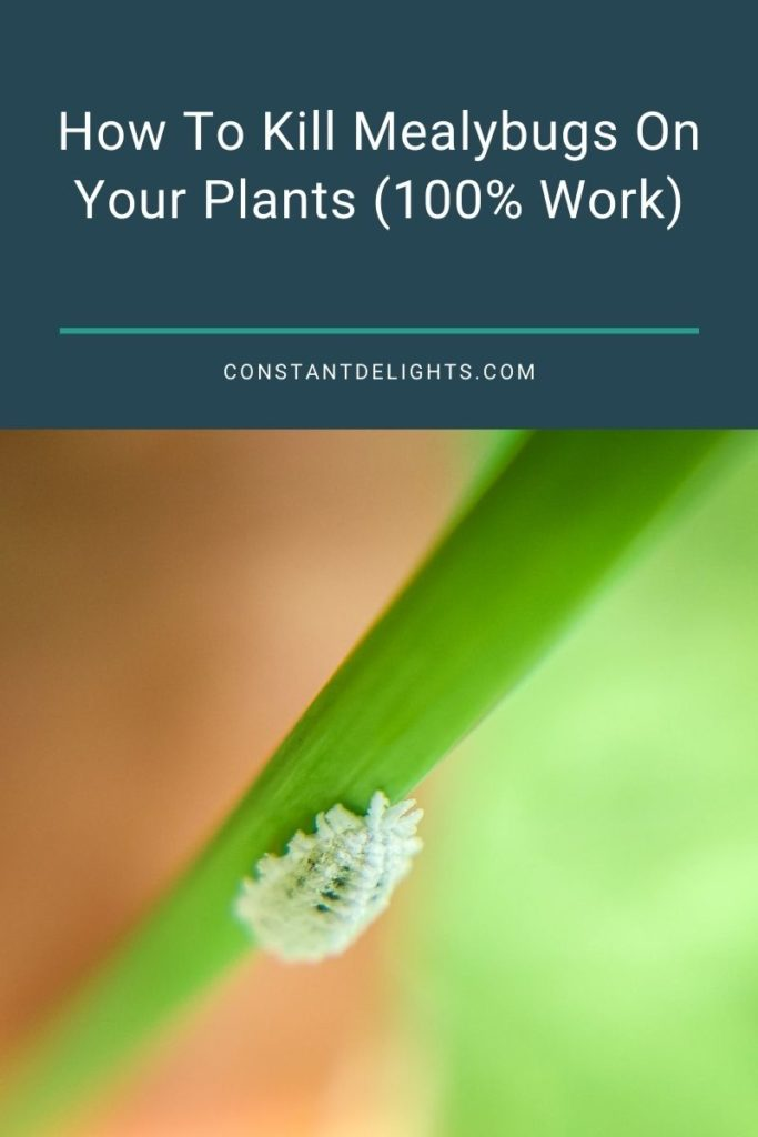 How To Kill Mealybugs On Your Plants (100% Work)
