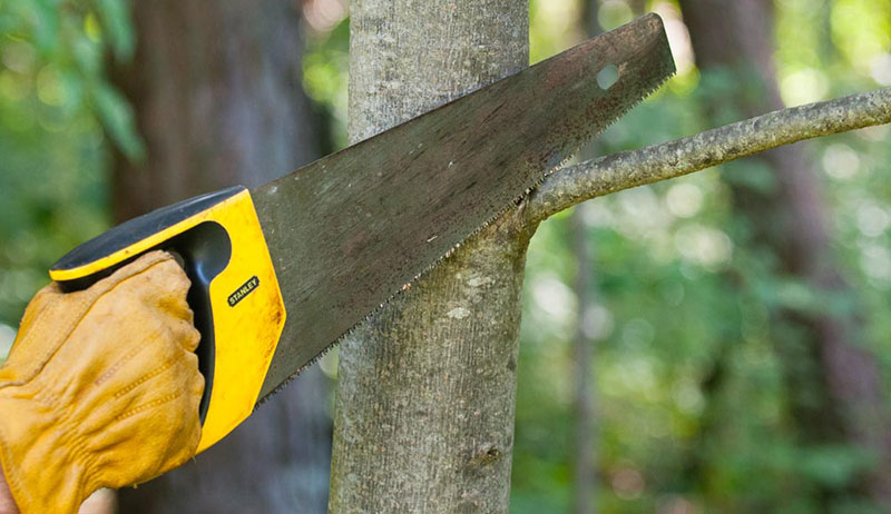 7 Best Hand Saw for Cutting Trees Review and Buying Guide