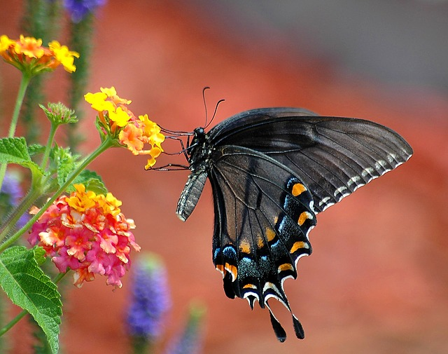 26 Plants that Attract Butterflies for Your Garden (Expert Recommendations)