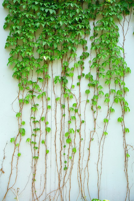 11 Best Choices for Climbing Plants with Help from Garden Experts